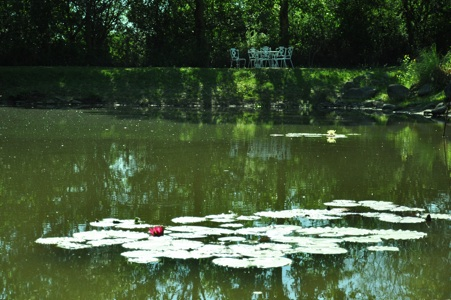 Water lilies on the lake (seating in the background)